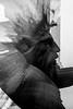 multiple exposure (Picturepest) Tags: schwarzweis schwarzweiss connection ausblick teilnahme participation sw blackwhite bw blackandwhite schwarzweisfotografie schwarzweissfotografie monochrome noir twit twart einfarbig dunkel dark wow art minimalism minimalismus abstraction conceptart europe europa minimal mannheim technoseum statue