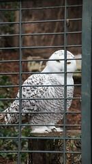 Wilhelma (www.die-letzte-crew.de) Tags: 180114 wilhelma zoo zoologischergarten stuttgart eule botanischergarten
