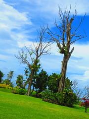 SAMOA (21) (stevefenech) Tags: oceania south pacific islands adventure travel backpacking stephen fenech fennock fun samoa