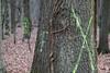 CKuchem-5822 (christine_kuchem) Tags: 14 2018 45 baumstamm baumstumpf bienen bienenstock blätter bäume fledermaus forst hambacher honigbienen impker impkerei januar kiste kästen laub löcher markierung moos nisthöhlen rinde stamm tagebau totholz wald waldspaziergang winter wurzel äste