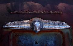 (jtr27) Tags: sdq1303l jtr27 sigma sd quattro sdq wabisabi foveon old antique vintage junk junkyard car auto automobile plymouth chrome badge emblem trim decay entropy impermanence 30mm f14 dc hsm dchsmart sigmaart