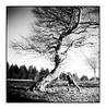 (bakmak71) Tags: dianamini blackforest schwarzwald schauinsland winter analog swfilm fomapan100 scanvomnegativ adonal buchen wetterbuchen baumstark beech