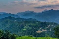 Soumrak nad zeleným rájem (zcesty) Tags: vietnam22 terasa soumrak rýže pole krajina hory vietnam dosvěta hàgiang vn