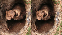 Runnymede 2018-4 -Stereo Crossview (Barrie_r) Tags: stereo 3d crossview crosseye runnymede