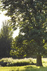 Discover Tree Identification - May 2017 (The Parks Trust) Tags: adulteducation adults theparkstrust trees treeidentification spring spring2017 ouzelvalley landscape