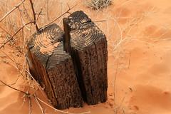 Swallowed Up (arbyreed) Tags: arbyreed sand sanddunes coralpinksanddunes kanecountyutah railroadtie burried covered sandy wood bollard pinksand driftingsand dunes
