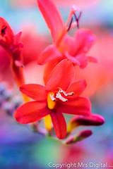 Mrs Digital Blickling Hall  (38 of 100) PF.jpg (Mr and Mrs Digital) Tags: flower plant macro summer blickinghall norfolk coth