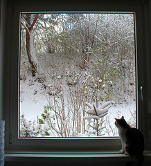 From the window (susy.drake) Tags: ifttt 500px morning winter nature cat bench snow alone mood loneliness window sill blinds greensboro frame hood latch northern red oak