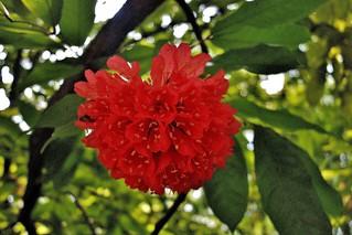 INDONESIEN, Im botanischen Garten von Bogor, 17083/9557