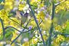 Hummer Heaven (NaturalLight) Tags: hummingbird bolsachicaecologicalreserve bolsachica bc california