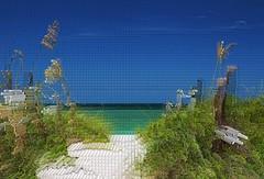 Timeless Scandal (Michiale Schneider) Tags: captivaisland florida beach landscape gulfofmexico nature photomanipulation michialeschneiderphotography digitalart
