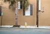 yellow 3 (schmollmolch) Tags: minimalism palm fireplug hydrant yellow