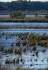 Dixon_JB_063_3223 (Joanne Bouknight) Tags: dixonwaterfowlrefuge illinois observationtower thewetlandsinstitute viewfromobservationtower whitepelican