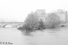 La pointe du Vert Galant  001 (letexierpatrick) Tags: paris hivers france noir blanc noirblanc seine explore extérieur europe eau fleuve inondation crue ville cof038 cof038dmnq cof038uki cof038mark o cof038mchi