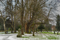 2018-02-24 Grand View Cemetery (03) (2048x1360) (-jon) Tags: anacortes fidalgoisland sanjuanislands skagitcounty skagit washingtonstate washington cemetery grandviewcemetery graveyard tree branches winter a266122photographyproduction snow