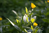 Ψίνθος (Psinthos.Net) Tags: ψίνθοσ psinthos ιανουάριοσ γενάρησ january winter χειμώνασ φύση εξοχή nature countryside afternoon απόγευμα απόγευμαχειμώνα χειμωνιάτικοαπόγευμα λουλούδια άγριαλουλούδια αγριολούλουδα wildflowers yellowflowers κίτριναλουλούδια χόρτα greens field χωράφι κιτρινάκια γύρη pollen ηλιόλουστημέρα sunnyday