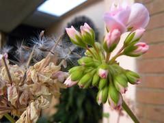 Lo hermoso está en los pequeños detalles. (Fabricioo Fuentes) Tags: naturaleza flora fauna vacaciones gato honduras guatemala ciudaddeguatemala nikonp90 nikon flor flores belleza colores primavera añonuevo gallo conejo granja pequeñosdetalles gata hermosura