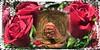 Red Rose Memories (gailpiland) Tags: roses face lady memories