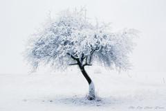 Minimalistic Winter (Rita Eberle-Wessner) Tags: baum tree landschaft landscape apfelbaum appletree schnee snow verschneit schneebedeckt snowy snowcovered feld field acker minimalistic minimalistisch winter odenwald
