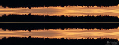Firs Top Sunset Audio Waveform (LeWelsch Photo) Tags: audio wav stereo waveform sunset forrest trees firs clouds silhouette könizbergwald crows daw raven bern switzerland a6000 ilce6000 sel55210 lewelsch