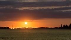 Sunkissed Summer Fields (Kurt Evensen) Tags: summer landscape sunset bright saltum denmark sky nordjylland field warm silhouette light northdenmarkregion dk