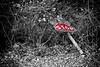 Don't Stop Me Now (Elisa Medeot) Tags: useless forgotten abbandonato abandoned red blackwhite selectivecoloring inutile canon