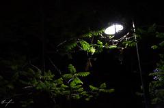 Aspecto nocturno (flea_14) Tags: mexico cdmx downtown night naturaleza nature hojas vegetacion luz light flowers green