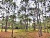 Miramar Pineland Park 07-20180120 (Kenneth Cole Schneider) Tags: florida miramar miramarpinelandpark
