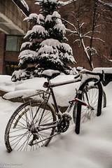 Le courage des uns (alex.bernard) Tags: vélo bicyclette bicycle hiver winter neige tempêtedeneige tempête snow snowfall snowstorm cold froid extérieur outdoor uqam universitéduquénecàmontréal montréal québec canada canon canon5diii tamron tamron2470