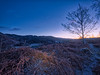 Morning Light (Swirly_Magnolia) Tags: loughrigg fell lake district lakes english uk england blue tree landscape sky morning dawn light yellow heather golden hour winter scene tarn skelwith bridge interesting mountains swirly magnolia nikon d7200 drama dramatic clear snow