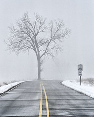 Tree in the Fog (mns_mike) Tags: indiana national lake shore dunes fog foggy road sign tree trees a6000 winter