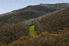 Green patch between the trees (Masoodz) Tags: green mount kosciuszko thredbo snowy mountains canon 650d 50mm niftyfifty googlenik dpp4 colorefexpro famalin nsw australia