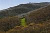Green patch between the trees (Masoodz) Tags: green mount kosciuszko thredbo snowy mountains canon 650d 50mm niftyfifty googlenik dpp4 colorefexpro famalin nsw australia
