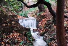 bosques_alhambra5
