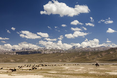 Shephard in the Tien Shan Mountains. (Joost10000) Tags: sheep shephard animals mountain mountains landscape remote wild wilderness outdoors grass sky clouds kyrgyzstan river asia centralasia tienshan scenic beauty nature canon canon5d eos horse