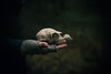 broken remains (Jen MacNeill) Tags: deer skull bone bones broken hand scary spooky dark dead death