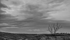 2018 - photo 041 of 365 - Monochrome of dikes blow Horton, Nova Scotia (old_hippy1948) Tags: dikes grandpre wolfville grayday