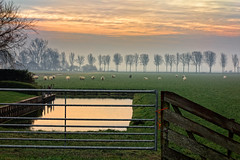 Condens On A Fence (Alfred Grupstra) Tags: nature fence tree landscape outdoors scenics ruralscene farm autumn grass sunset meadow sky beautyinnature field season agriculture winter morning nopeople sheep mist