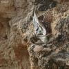Pair of little owls (Dave 5533) Tags: animal outdoor littleowl owl bird birdofprey wild nature wildlife birdphotography wildlifephotography naturephotography canoneos1dx canonef300mmf28 wildlifeinisrael birds animalplanet ngc