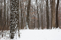 A Discussion Amongst Trees (John Westrock) Tags: nature trees forest winter waukesha minookapark snow wisconsin midwest canoneos5dmarkiii canonef2470mmf28lusm