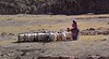 Nomads, Tibet 2017 (reurinkjan) Tags: tibetབོད བོད་ལྗོངས། 2017 ༢༠༡༧་ ©janreurink tibetanplateauབོད་མཐོ་སྒང་bötogang tibetautonomousregion tar ütsang ngamringངམ་རིང་།county northlato goatmilking livestockསྒོ་ཟོག་སེམས་ཅནgozoksemchen nomadsའབྲོག་པ།brogpadrokpa nomadསོག་ཡུལ་གྱི་འབྲོག་པsokyülgyindrokpa individualnoncollectivizednomadsཁེར་རྐྱང་འབྲོག་པkherkyangdrokpa nomadswhoareadeptattamingcattleཕྱུགས་འདུལ་བ་ལ་རབ་ཏུ་མཁས་པའི་འབྲོག་པchundülbalaraptukhepédrokpa nomadrichincattlecattlewealthཕྱུགས་ཀྱིས་ཕྱུག་chukkyichuk nomadmanཕོ་ཁྱོ་ཁྱོ་འབྲོག་པ་phokhyobrogpa himalayasརི་གངས་ཅནrigangchen tibetanlandscapepicture landscapeཡུལ་ལྗོངས།yulljongsyünjong