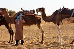 Inspection (Nicolas Bussieres (Lost Geckos)) Tags: desert sahara morocco camel