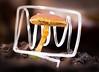 Lichtmal-Pilz / Lightdrawing-mushroom (lars.br3m3n) Tags: pilz lichtmalerei illumination