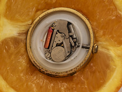 Clockwork Orange (Loopy-Lou365) Tags: myfavouritenovelfiction macromondays watch orange clockwork fruit macro
