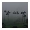 Palmiers à cire / Salento - Colombie (PtiteArvine) Tags: palmiersàcire palmiers arbres brouillard pluie mauvaistemps badweather rain fog valléedecocora salento colombie amériquedusud