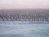 FrostGlow.jpg (Klaus Ressmann) Tags: klaus ressmann omd em1 fburie landscape vineyard winter flcnat klausressmann omdem1