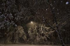 Winter Storm Inga (Karnevil) Tags: usa us unitedstatesofamerica unitedstates northamerica america northcarolina nc raleigh winter icestorm cold freezing snow ice frozen icicle winterstorminga nikon d610 petekreps