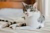 Port Macquarie - Alaska (burntfeather) Tags: portmacquarie port australia newsouthwales kitty catphotography cat cutecat alaska