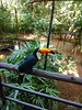 (sendman) Tags: tucano toucan iguaçu cataratas parquedasaves