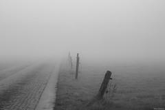 """wat komt... komt"" (B.Graulus) Tags: photography picture photo monochrome misty morning herent flanders belgium vlaamsbrabant belgië belgique landscape landschap road field"